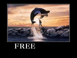 free+willy_ddb324_3330439