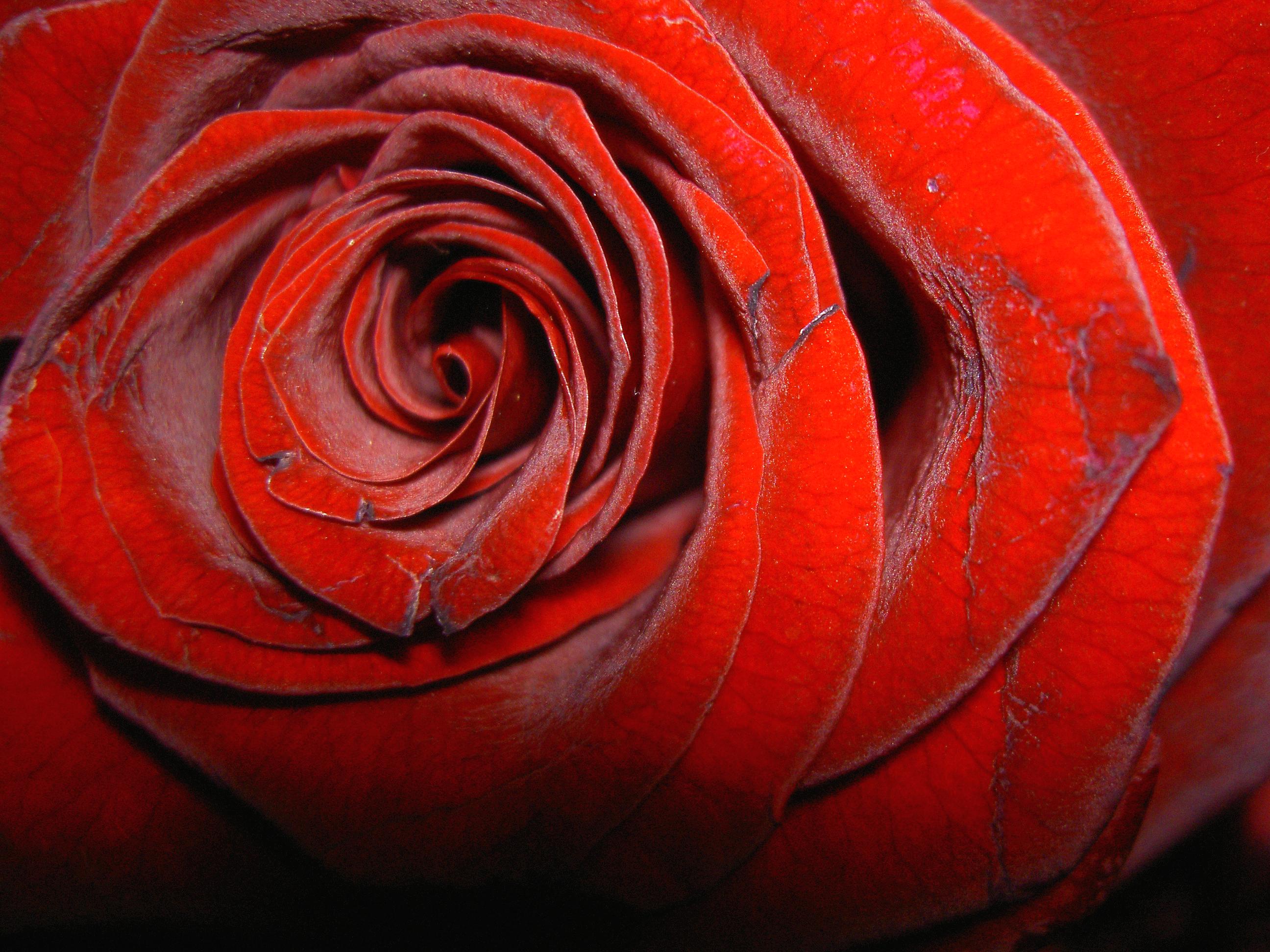 http://www.morguefile.com/archive/#/?q=valentine